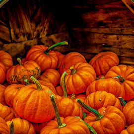 Bushel of Pumpkins by James Kirk - Food & Drink Fruits & Vegetables ( orange, pumpkins, bushal )