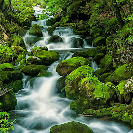 Stream by Janez Podnar - Landscapes Waterscapes