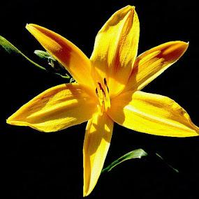 Sun Bathing by Ivy Luna - Nature Up Close Flowers - 2011-2013 ( , Lighting, moods, mood lighting )