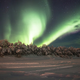 Northern lights by Natalia Dobrescu - Landscapes Travel ( lights, winter, night photography, lapland, winter wonderland, northern lights, aurora borealis, finland, long exposure, arctic circle, nightscape )
