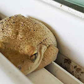 Froggy in the window by Christina McGeorge - Instagram & Mobile Android ( fog, toad )