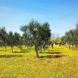 by Domenico Liuzzi - Nature Up Close Gardens & Produce