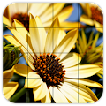 Tile Puzzles · Flowers APK for Bluestacks