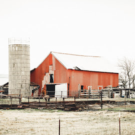 Color of Winter on the Farm by Rob Heber - Landscapes Travel ( damaged, countryside, tine roof, natural light, coral, red barn, horse, farmland, rusty, landscape, rustic, weathered, farm, pasture, debris, nature, barn, metal, no people, grain silo, dry grass, old barn, country life, farm animals, ranch, corral, overcast, silo, rural, livestock, field, fence, winter, outdoors, barbed wire fence, decay )