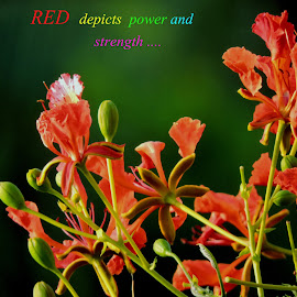 RED BEAUTY by SANGEETA MENA  - Typography Quotes & Sentences
