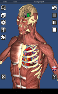 Free Download 3D Bones and Organs (Anatomy) APK for Samsung