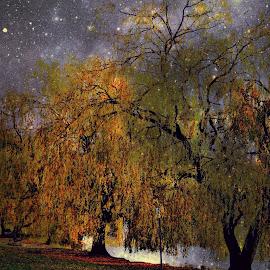 Park at night by Stephen Avery  - City,  Street & Park  City Parks ( hornchurch, park, essex, stars, night,  )