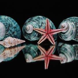 Shells by Peter Salmon - Artistic Objects Other Objects