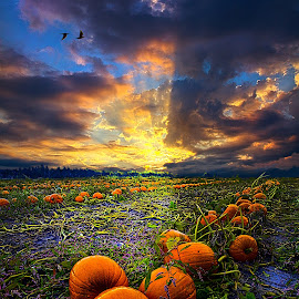 Pumpkin Serenade by Phil Koch - Public Holidays Halloween ( summer. spring, vertical, photograph, environement, farmland, yellow, leaves, halloween, love, nature, autumn, flowers, orange, pumpkin, twilight, agriculture, horizon, myhorizonart, portrait, winter, national geographic, serene, floral, inspirational, natural light, wisconsin, phil koch, spring, sun, photography, farm, pwcpumpkins, horizons, inspired, clouds, office, green, scenic, morning, field, red, seasons, blue, sunset, peace, fall, meadow, sunrise, earth, landscapes, garden, patch, pumpkins, , Thanksgiving Challenge, country, rustic, rural, old, backroads, barn, silo, crops, family, hdr, orange. color, color, colorful )