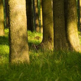 Mala Moravka  by Michal Valenta - Landscapes Forests