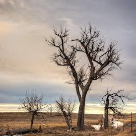 Dry creek by Jim Talbert - Landscapes Prairies, Meadows & Fields ( sky, grass, creek, trees, kansas )