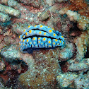 Warty nudibranch