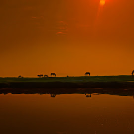 Down by Fereshteh Molavi - Animals Horses ( lagoon, horses, meadow, reflections, sun )