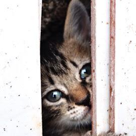 by Ruyat Supriazi - Animals - Cats Kittens
