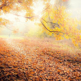Golden fall by Codrutza Iana - Landscapes Forests (  )