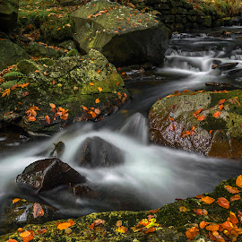 Podzimní potok by Martin Namesny - Nature Up Close Water ( water, stream, autumn, magical, moss, leaves, stones, river )