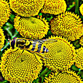 Yellow by Janine Kain - Nature Up Close Other plants ( colour, macro, nature, bee, vivid, vibrant, yellow )