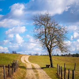road to ... by Janez Šturm - Landscapes Prairies, Meadows & Fields ( clouds, field, sky, tree, bench, road )
