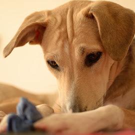 Look what I got by Minakshi Sur - Animals - Dogs Puppies ( #dog, #puppylove, #puppy, #cute, #puppyplay,  )