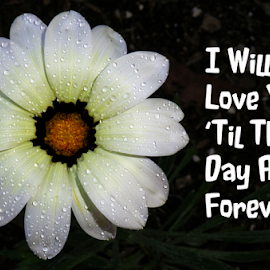 I Will Love You 'Til The Day After Forever by Kris Pate - Typography Quotes & Sentences