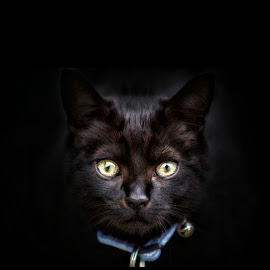 by Kelly Murdoch - Animals - Cats Portraits