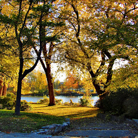Autumn At The Island by Howard Sharper - City,  Street & Park  City Parks ( park scene, cityscapes, peaceful, riverside, autumn, autumn colors )
