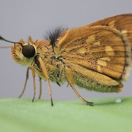 Skipper by AbngFaisal Ami - Instagram & Mobile Other