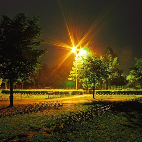 Night by Raymon Brugman - City,  Street & Park  City Parks ( lights, tree, trees, night, light )