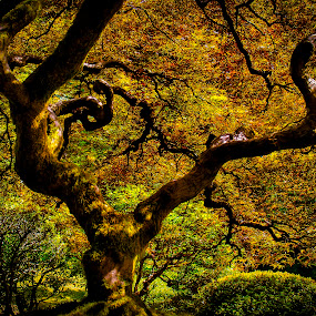 Portland's Tree of Life by Scott Wood - Nature Up Close Trees & Bushes ( orange, oregon, trunk, portland, tree, foliage, colors, green, fall, japanese, nxnw, garden, tree of life )
