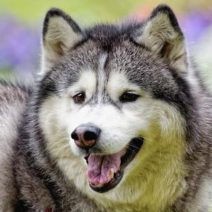 Dog 878_DxO-1 C X.jpg