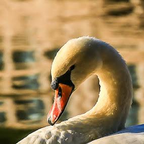 by Flaviu Negru - Animals Birds (  )