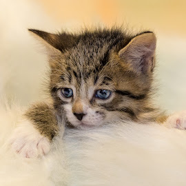by Terry Watson - Animals - Cats Kittens