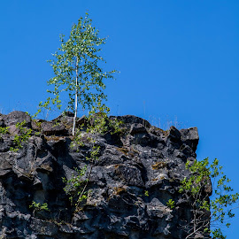 High and Dry by Lizzy MacGregor Crongeyer - Landscapes Forests ( distance, sky, nature, tree, blue, rock, castle, lone, high, wall )