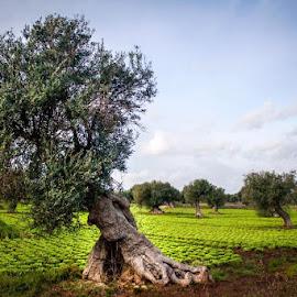 P U G L I A (EOS 350D) by Domenico Liuzzi - Nature Up Close Gardens & Produce