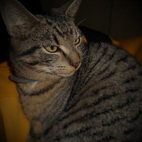 Milo```` by Liz Pascal - Animals - Cats Portraits