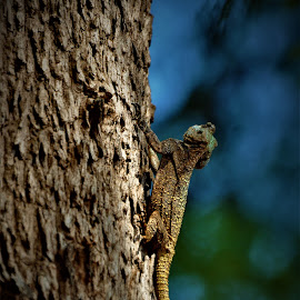 by Orpa Wessels - Animals Reptiles