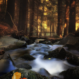 Autumn Forest by Ivailo Atanasov - Landscapes Forests ( water, season, autumn, cascade, waterfall, fall, forest, river )