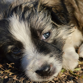 by OL JA - Animals - Dogs Puppies
