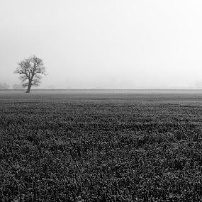 Frosty Morning by Colin Strain - Landscapes Prairies, Meadows & Fields ( field, nutfield marsh, tree, fog, frost, mist )