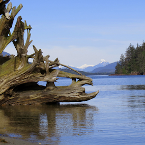 Mountain Driftwood by Janet Gilmour-Baker - Landscapes Waterscapes ( driftwood, mountains, waterscape, changing with the tide, vanvcouver island, changing, oceans, landscape, island )