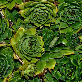 by Slavko Marčac - Nature Up Close Other plants