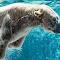 Polar bear underwater 2.jpg
