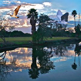 { Sunset along The Golf Course ~ 29 June }  by Jeffrey Lee - Digital Art Animals ( { sunset along the golf course ~ 29 june } )