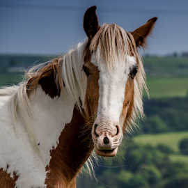 Patch by Mandy Hedley - Animals Horses ( field, looking, horse, patch, animal,  )