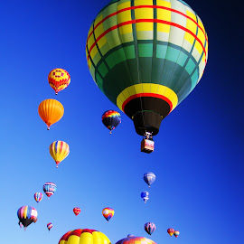 Balloons - Albuquerque 2007 by Dee Haun - Transportation Other ( many, hot air, balloon fiesta, tansportation, 2007, colorful, wide angle, albuquerque, launching, 31 mm equiv, hot air balloons, balloons )