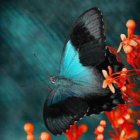 Blue Mood... by Irfan Hikmawan - Animals Insects & Spiders (  )