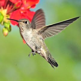 by Michelle Hunt - Animals Birds