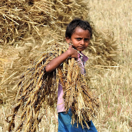 Boy in wheat field  by Rajeev Sinha - Babies & Children Children Candids ( wheat field, boy )