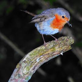by Martin McCaul - Animals Birds