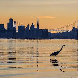 Wild Modernism  by Art Khosravi - Uncategorized All Uncategorized ( water, building, california, sf, bay bridge, bay area, cityscape, city, bird, sunset, bridge, conceptual, san francisco, downtown )